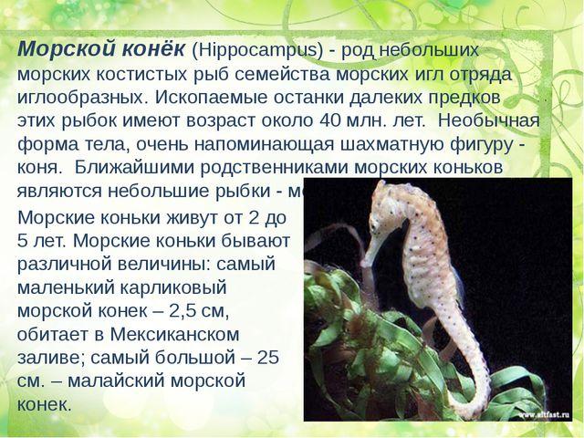 Морской конёк (Hippocampus) - род небольших морских костистых рыб семейства м...