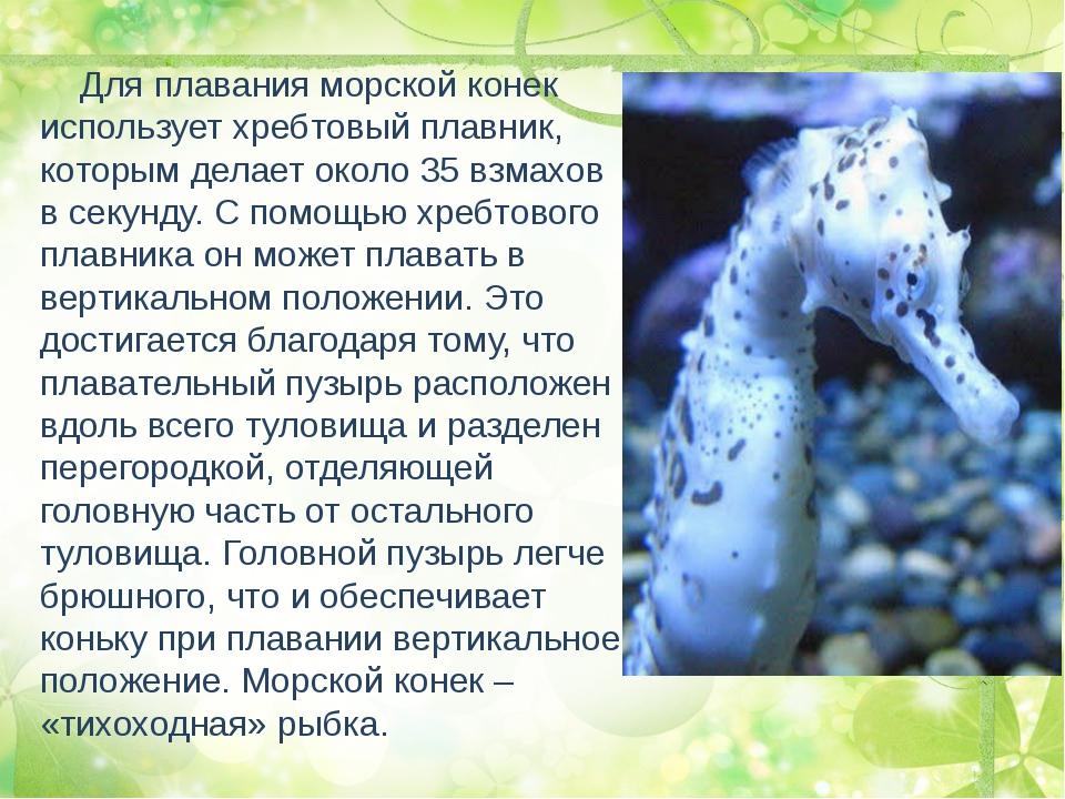 Для плавания морской конек использует хребтовый плавник, которым делает окол...