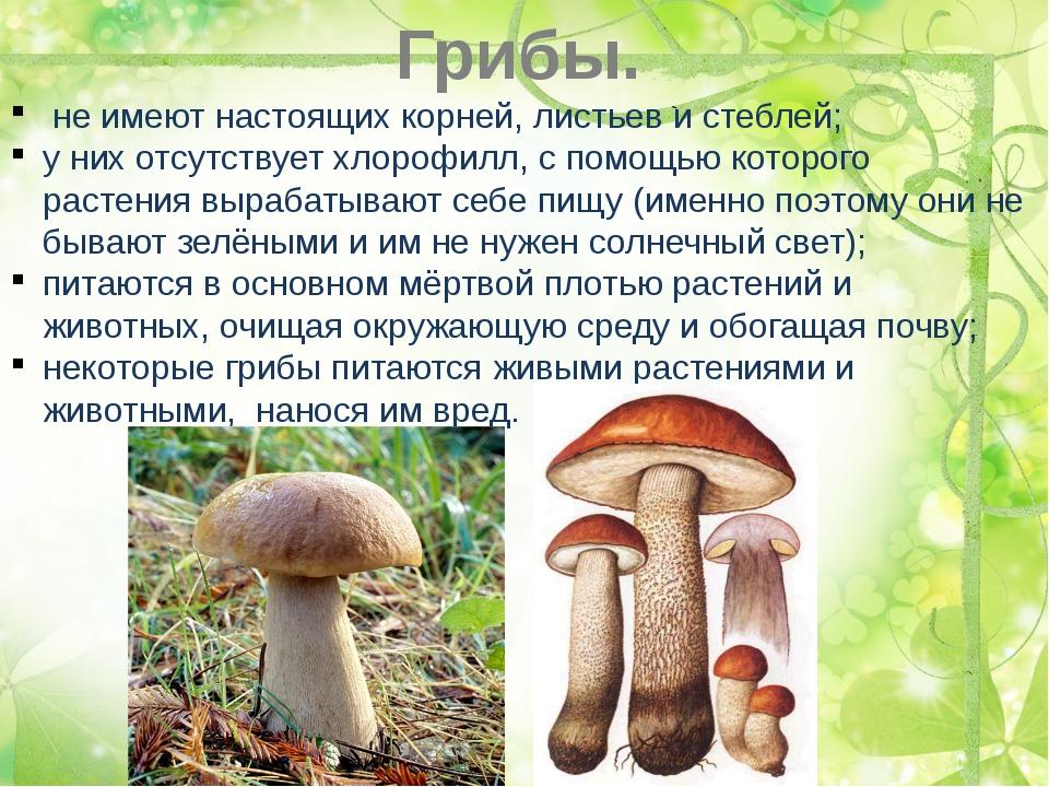 Грибы. не имеют настоящих корней, листьев и стеблей; у них отсутствует хлороф...