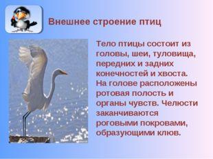 Внешнее строение птиц Тело птицы состоит из головы, шеи, туловища, передних и