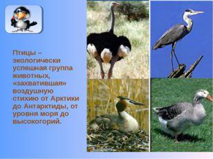 Птицы – экологически успешная группа животных, «захватившая» воздушную стихию