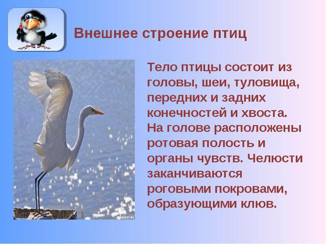 Внешнее строение птиц Тело птицы состоит из головы, шеи, туловища, передних и...