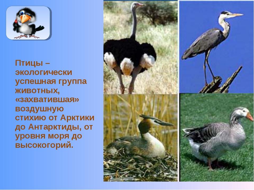Птицы – экологически успешная группа животных, «захватившая» воздушную стихию...