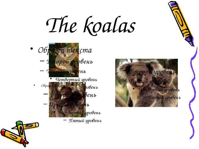 The koalas