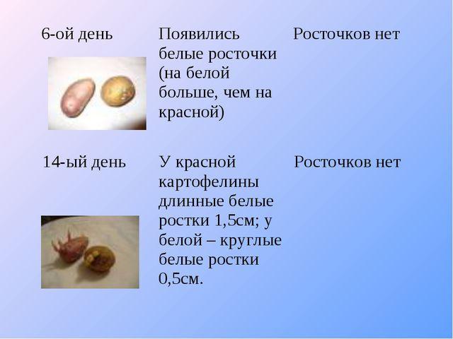6-ой деньПоявились белые росточки (на белой больше, чем на красной)Росточко...