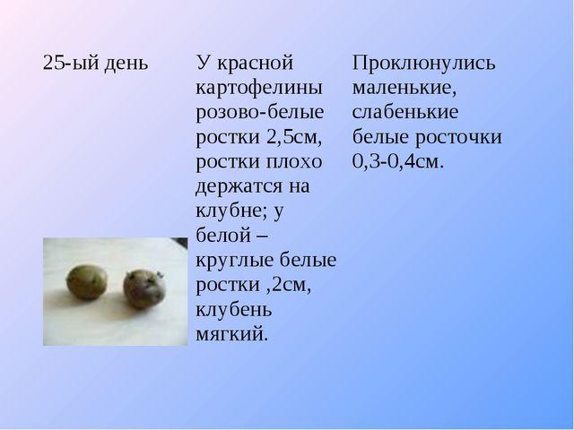 25-ый деньУ красной картофелины розово-белые ростки 2,5см, ростки плохо держ...