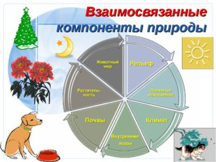 Взаимосвязанные компоненты природы Стр. * 20.01.2006 Презентация