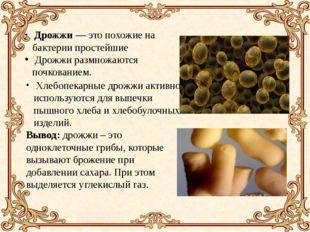 Дрожжи — это похожие на бактерии простейшие Дрожжи размножаются почкованием.