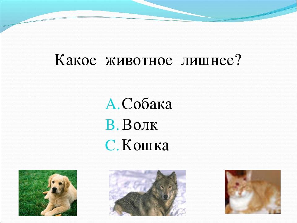 Какое животное лишнее? Собака Волк Кошка