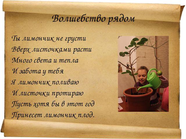 Волшебство рядом Ты лимончик не грусти Вверх листочками расти Много света и т...