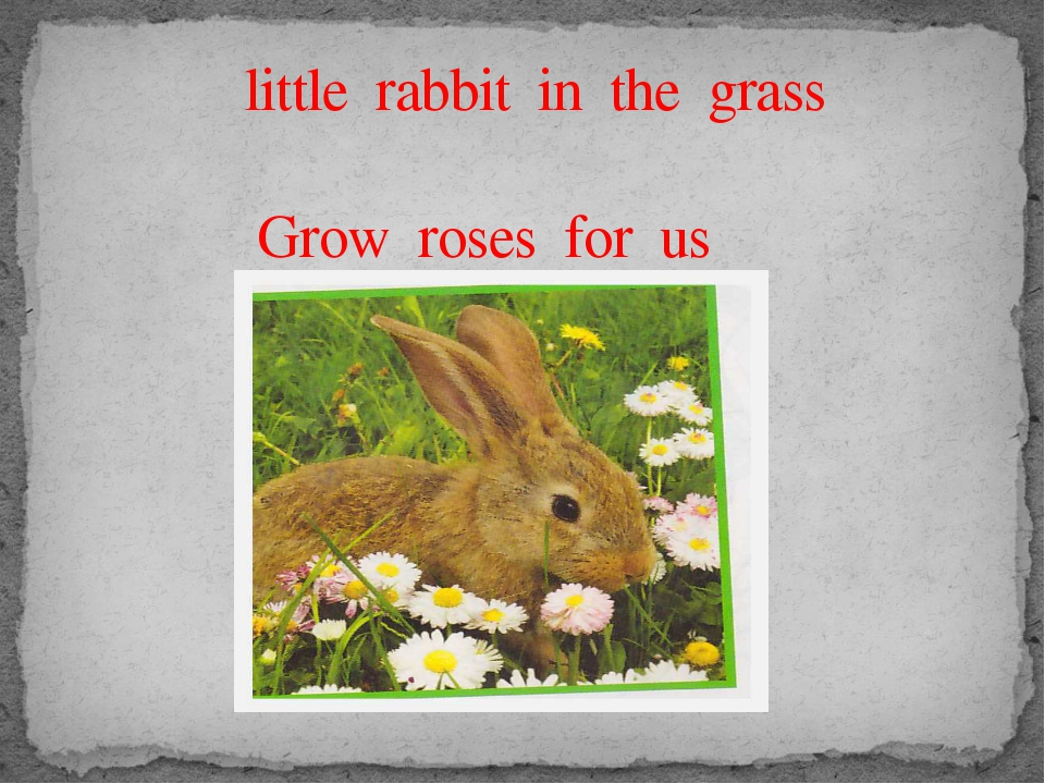 little rabbit in the grass Grow roses for us