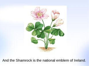 And the Shamrock is the national emblem of Ireland.