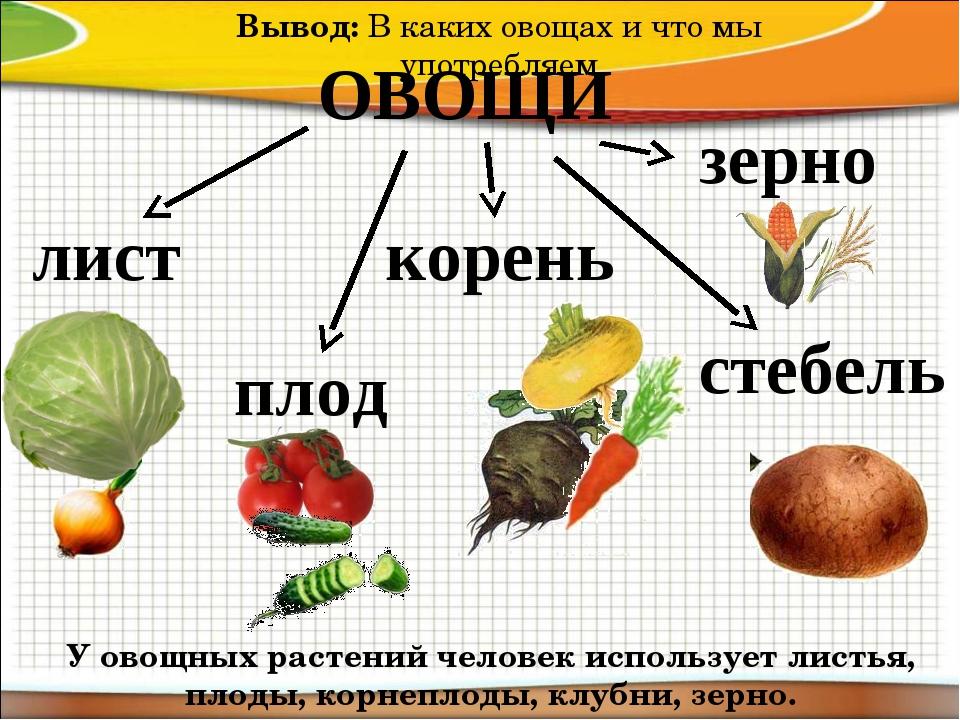 ОВОЩИ лист корень плод стебель Вывод:В каких овощах и что мы употребляем У о...