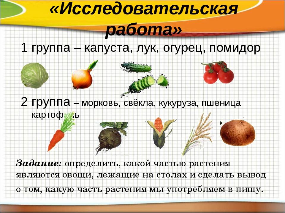 «Исследовательская работа» 1 группа – капуста, лук, огурец, помидор 2 группа...