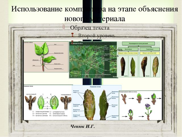 Использование компьютера на этапе объяснения нового материала Чепюк И.Г. 