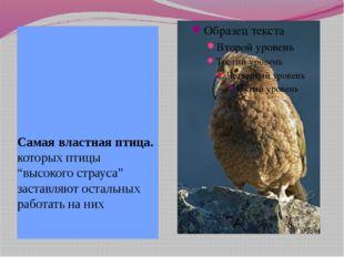 """Самая властная птица. которых птицы """"высокого страуса"""" заставляют остальных р"""