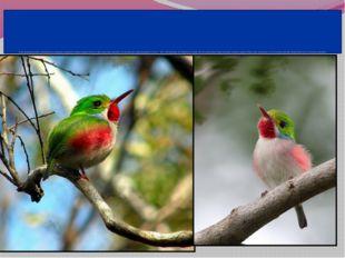Самая прожорливая птица - кубинский тоди, живущийна островах Вест-Индии. Каж