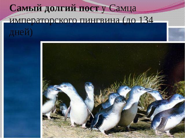 Самый долгий пост у Самца императорского пингвина (до 134 дней)