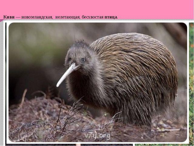 Киви — новозеландская, нелетающая, бесхвостая птица.