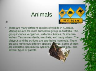 Animals   There are many different species of wildlife in Australia. Marsupia