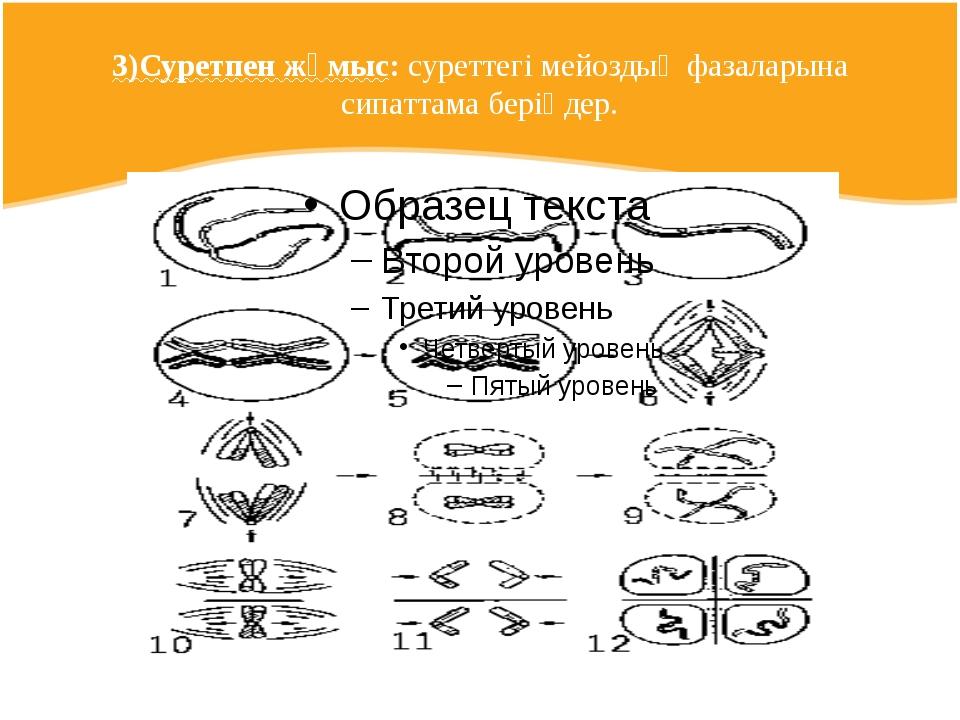 3)Суретпен жұмыс: суреттегі мейоздың фазаларына сипаттама беріңдер.