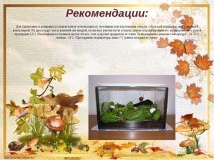 Рекомендации: Для содержания в домашних условиях может использоваться стеклян