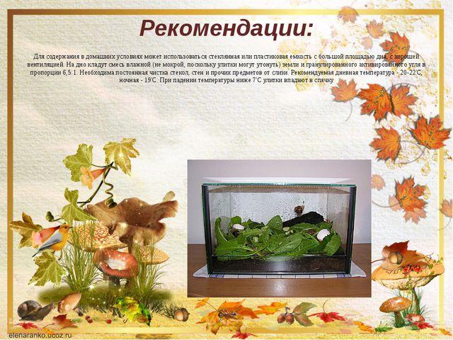 Рекомендации: Для содержания в домашних условиях может использоваться стеклян...
