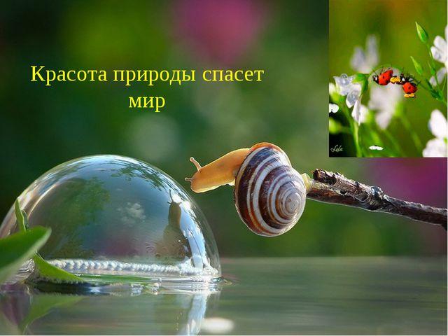 Красота природы спасет мир