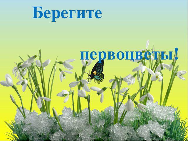 Презентация Нечаевой О.П. Берегите первоцветы!