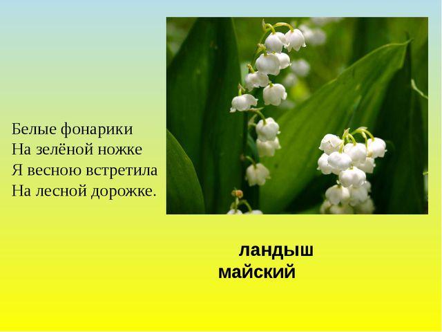 ландыш майский Белые фонарики На зелёной ножке Я весною встретила На лесной...