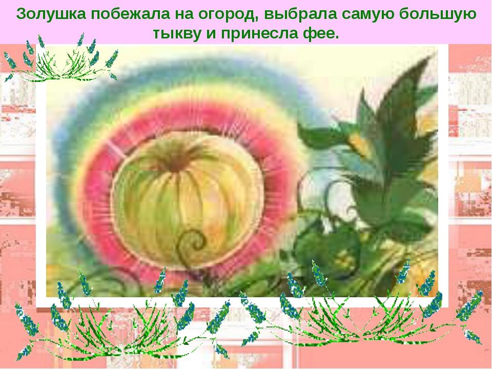 Золушка побежала на огород, выбрала самую большую тыкву и принесла фее.