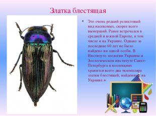 Златка блестящая Это очень редкий реликтовый вид насекомых, скорее всего выме