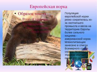 Европейская норка Популяция европейской норки резко сократилась из-за охотнич