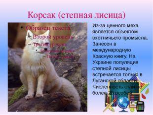 Корсак (степная лисица) Из-за ценного меха является объектом охотничьего пром