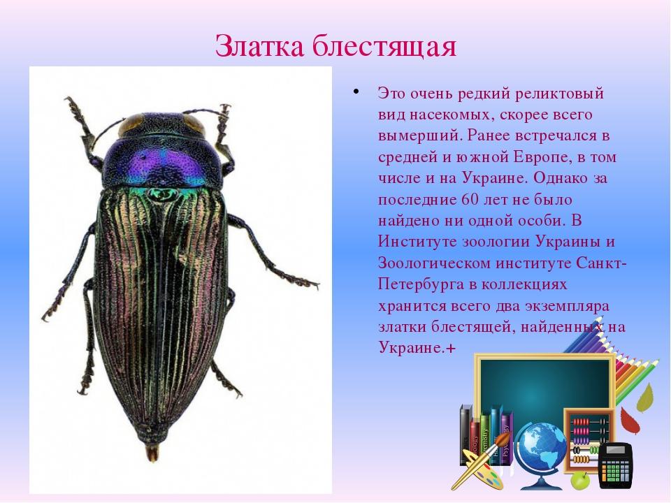 Златка блестящая Это очень редкий реликтовый вид насекомых, скорее всего выме...
