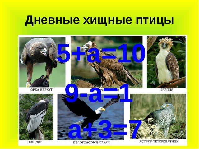 Дневные хищные птицы 9-а=1 а+3=7 5+а=10