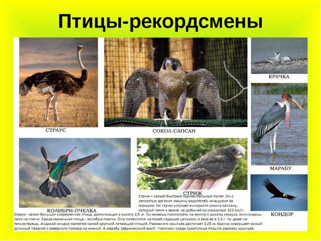 Птицы-рекордсмены