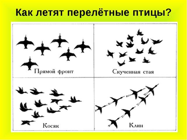 Как летят перелётные птицы?
