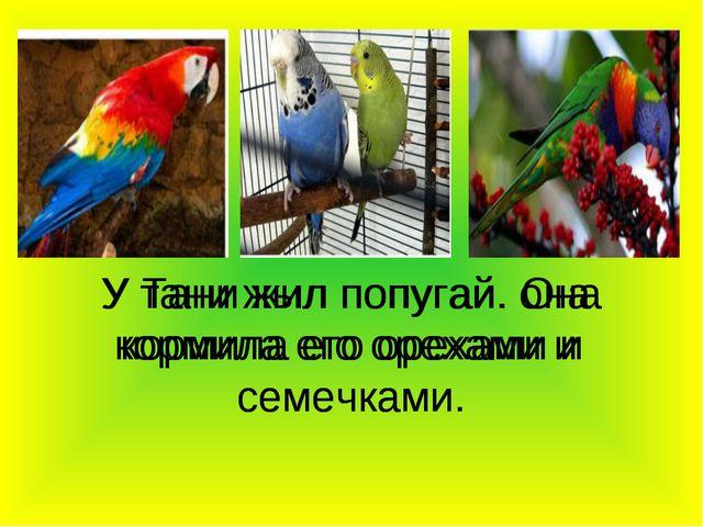У тани жыл попугай. она кормила его орехами и семечками У Тани жил попугай. О...