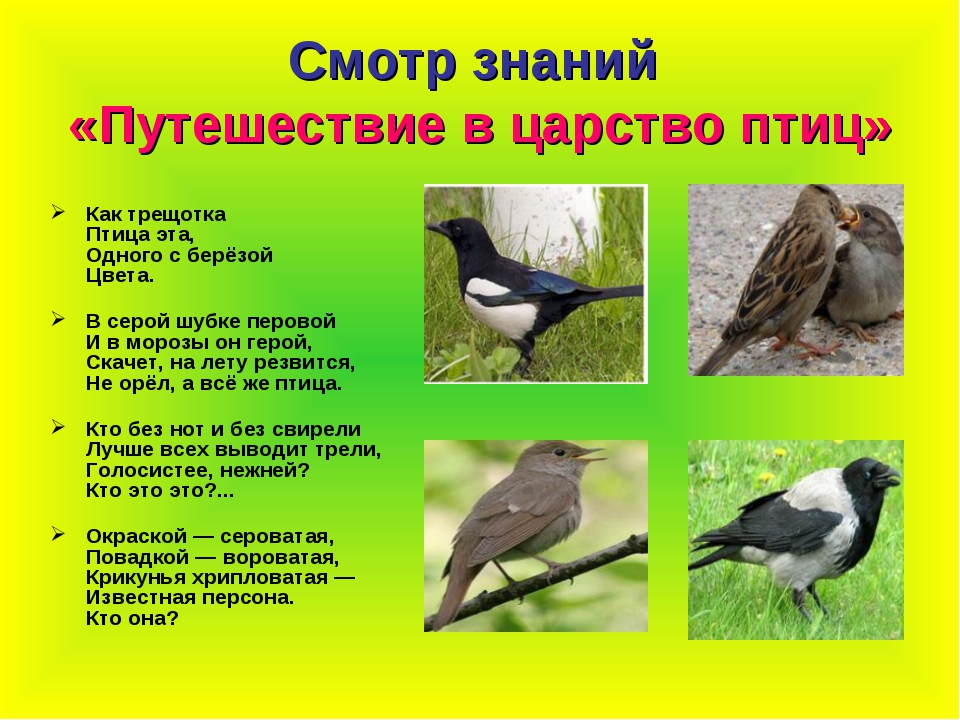 Смотр знаний «Путешествие в царство птиц» Как трещотка Птица эта, Одного с бе...