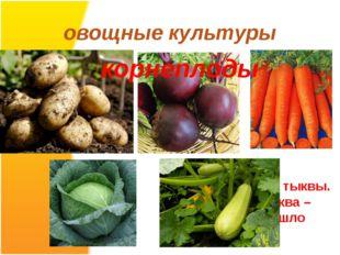 овощные культуры Этот овощ разновидность тыквы. По- турецки тыква – кабак. Во