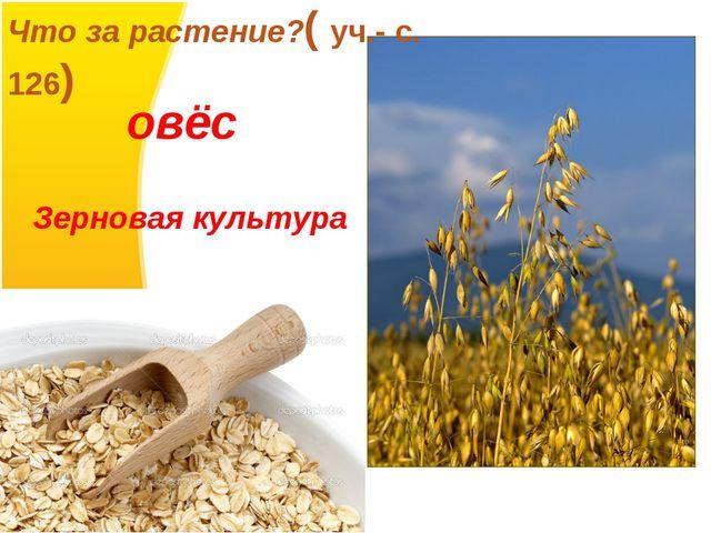 Что за растение?( уч.- с. 126) овёс Зерновая культура