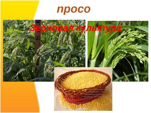 просо Зерновая культура