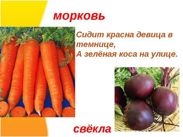 морковь Сидит красна девица в темнице, А зелёная коса на улице. свёкла