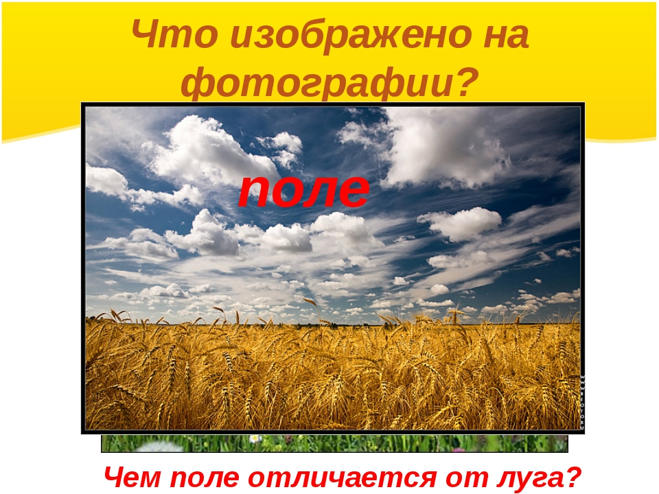 Что изображено на фотографии? поле Чем поле отличается от луга?