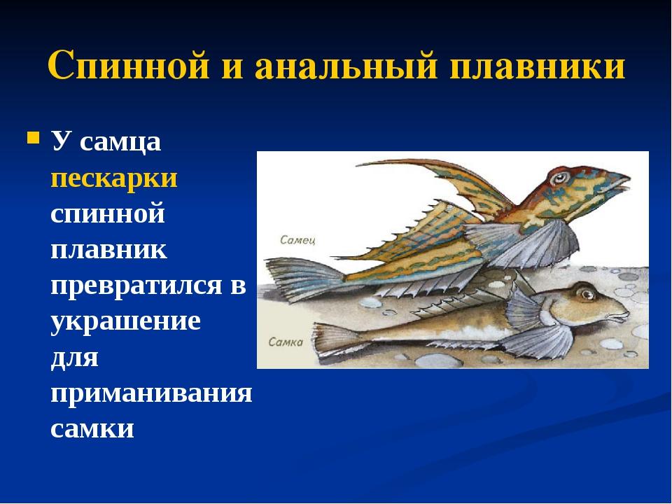 analniy-plavnik-u-samtsov