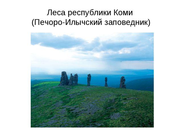 Леса республики Коми (Печоро-Илычский заповедник)