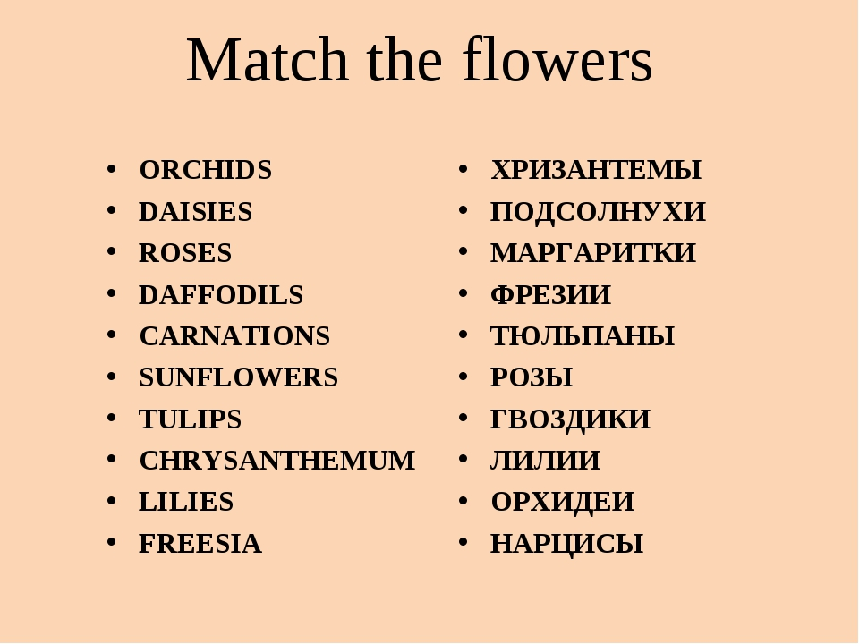 Match the flowers ORCHIDS DAISIES ROSES DAFFODILS CARNATIONS SUNFLOWERS TULIP...