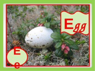 Ee Egg Ee