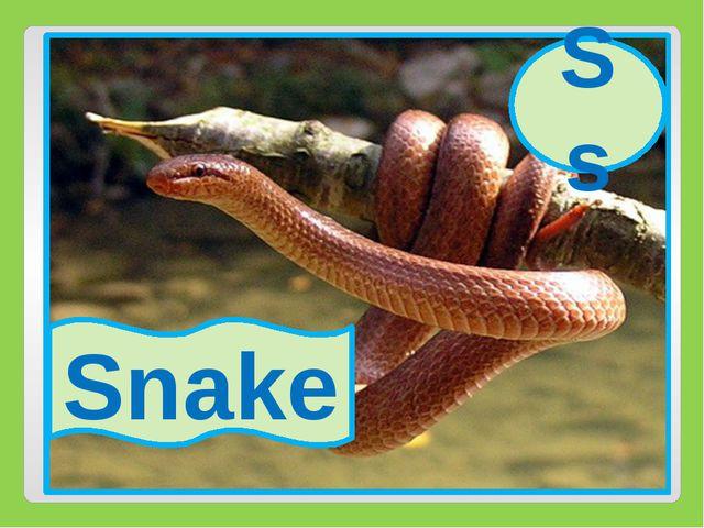 Ss Snake Ss